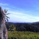 trilha-pico-agudo-santo-antonio-do-pinhal-11