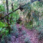 trilha-pico-agudo-santo-antonio-do-pinhal-12