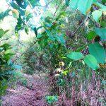 trilha-pico-agudo-santo-antonio-do-pinhal-2