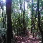 trilha-pico-agudo-santo-antonio-do-pinhal-5