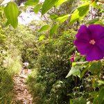 trilha-romeiros-santo-antonio-do-pinhal-6