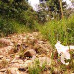 trilha-romeiros-santo-antonio-do-pinhal-7